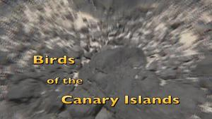 Birds.of.the.Canary.Islands